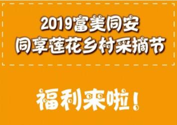 """2019 """"富美同安 同享莲花""""乡村采摘节等你来撩!"""